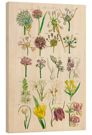 Legno  Wildflowers, Sowerby 1281-1300 - Ken Welsh