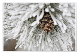 Poster Premium Pinecone in frost