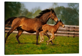 Stampa su alluminio  Horses in Ireland - The Irish Image Collection