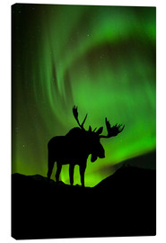 Stampa su tela  Moose silhouetted against the Northern Lights - John Hyde