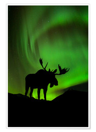 Poster Premium  Moose silhouetted against the Northern Lights - John Hyde