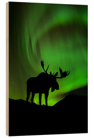 Stampa su legno  Moose silhouetted against the Northern Lights - John Hyde