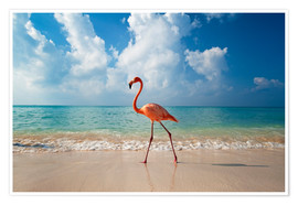 Poster  Flamingo on the beach - Ian Cuming