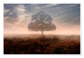 Poster Premium New Forest