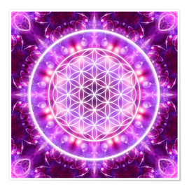 Poster Flower of Life - Transformation