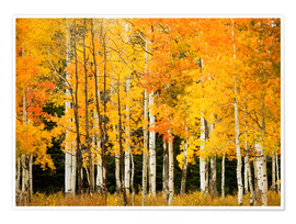 Poster Premium Autumn Forest at Buffalo Pass