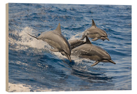 Legno  Dolphins jump in - Dave Fleetham
