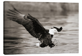 John Hyde - Bald Eagle Hunting