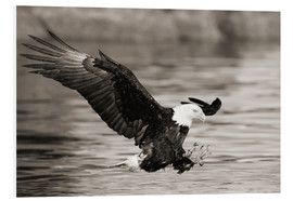 Forex  Bald Eagle Hunting - John Hyde