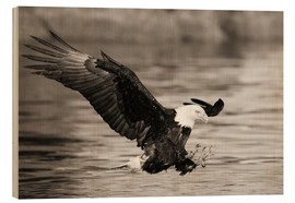 Legno  Bald Eagle Hunting - John Hyde