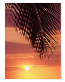 Poster Palm evening