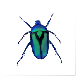 Poster Premium  Green Beetle - Henry Lin