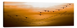 Stampa su tela  Geese flying into the sunset - Chad Coombs