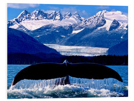John Hyde - Fin of a humpback whale