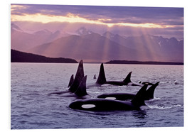 John Hyde - Orcas in the evening