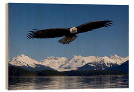 Legno  Bald Eagle in Tongase National Forest - John Hyde