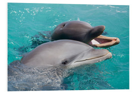 Stampa su PVC  Two bottlenose dolphins - Dave Fleetham