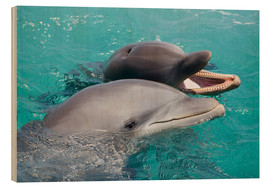 Stampa su legno  Two bottlenose dolphins - Dave Fleetham