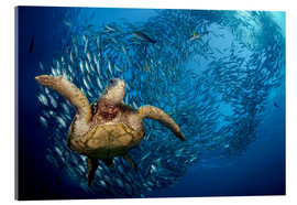 Vetro acrilico  Green sea turtle before Bali - Dave Fleetham