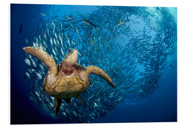 Stampa su schiuma dura  Green sea turtle before Bali - Dave Fleetham