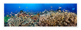 Poster Premium  Coral reef off Bali - Dave Fleetham
