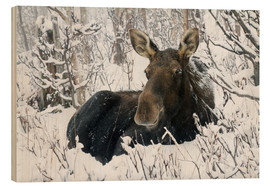 Stampa su legno  Cow elk in a winter forest - Philippe Henry