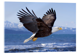 Don Pitcher - Flying Bald Eagle