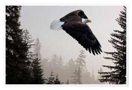 Poster Premium  Bald Eagle in the Mist - John Hyde