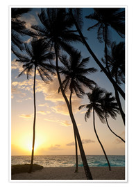 Poster Premium  Silhouette of palm trees at dawn - Ian Cuming