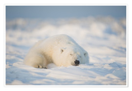 Poster Premium  Young Polar bear on pack ice - Steve Kazlowski