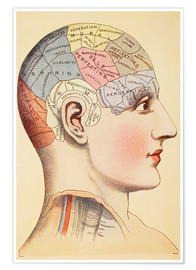 Poster Premium  Map of the human brain - Wunderkammer Collection