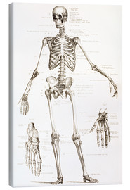 Stampa su tela  The Human Skeleton - Ken Welsh