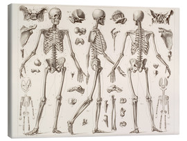Stampa su tela  Skeleton Of A Fully Grown Human - Wunderkammer Collection