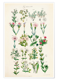 Poster Premium British wildflowers