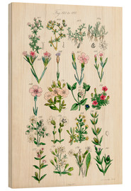 Stampa su legno  British wildflowers - Ken Welsh