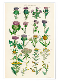 Poster Premium  wildflowers - Sowerby Collection