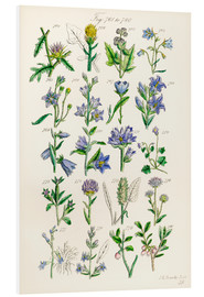 Forex  Wildflowers, Sowerby - Ken Welsh