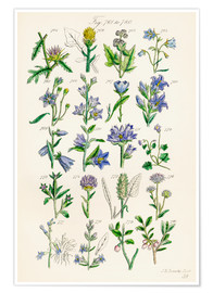 Poster  Wildflowers, Sowerby - Ken Welsh