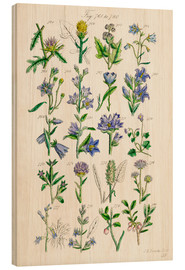 Legno  Wildflowers, Sowerby - Ken Welsh