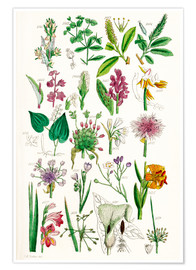 Poster Premium  Wild Flowers - Sowerby Collection