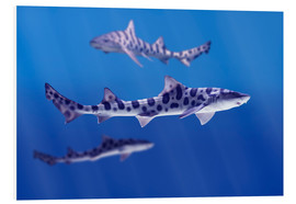 Forex  Leopard sharks - Don Hammond