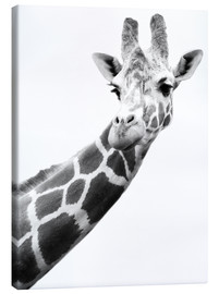 Tela  A Giraffe in black and white - Darren Greenwood
