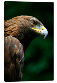 Tela  Golden Eagle's Face (Aquila Chrysaetos) - Deddeda