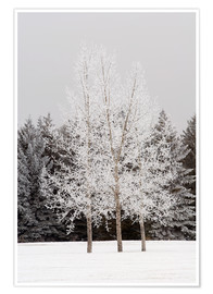 Poster Premium Frost On Trees