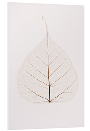 Forex  Transparent Leaf - Kelly Redinger