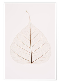 Poster  Transparent Leaf - Kelly Redinger