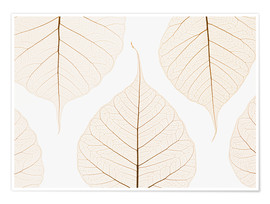 Poster  Transparent leaves - Kelly Redinger