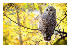 Poster Premium owl on branch