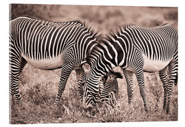 Stampa su vetro acrilico  Two Zebras Grazing Together - David DuChemin