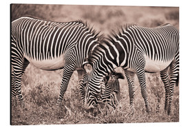 Stampa su alluminio  Two Zebras Grazing Together - David DuChemin